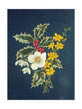 Holly, Christmas Rose, Snowdrop and Winter Jasmine Giclee Print by Ursula Hodgson