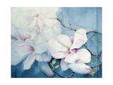 Magnolia Soulangeana (Horizontal) Giclee Print by Karen Armitage
