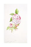 Rosa Ferdinand Pichard Giclee Print by Sarah Creswell