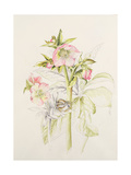 Japanese Anemones Giclee Print by Alison Cooper