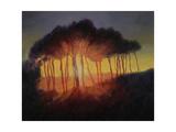Wild Trees at Sunset, 2002 Giclee Print by Antonia Myatt
