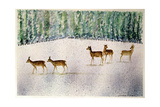 Deer in Snow Giclee Print by Suzi Kennett