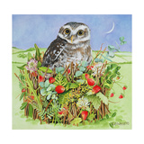 Owl in a Woodland Basket, 1993 Giclee Print by E.B. Watts