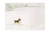 Springer Spaniel in the Snow Giclee Print by Suzi Kennett