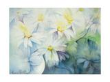 Daisies, Shasta Giclee Print by Karen Armitage