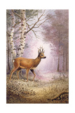 Roe-Deer Giclee Print by Carl Donner