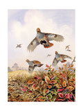 Flushed Partridges Giclee Print by Carl Donner