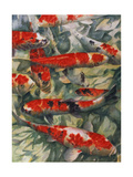 Koi Carp Giclee Print by Gareth Lloyd Ball