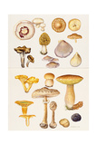 Mushrooms and Truffles Giclee Print by Elizabeth Rice