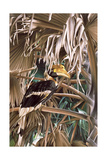Hornbill, 1987 Giclee Print by Sandra Lawrence