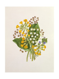 Lily of the Valley and Cowslips Giclee Print by Ursula Hodgson