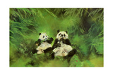 Pandas, 1998 Giclee Print by Odile Kidd
