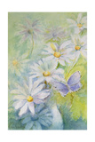 Common Blue (Polyommetus Icarus) on Daisies Giclee Print by Karen Armitage