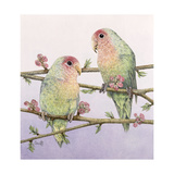 Love Birds Giclee Print by Pat Scott