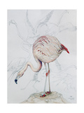 Flamingo Giclee Print by Carolyn Hubbard-Ford