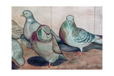 Pigeons Giclee Print by Carolyn Hubbard-Ford