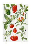 Tomatoes and Related Vegetables, 1986 Giclee Print by Elizabeth Rice