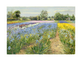 Floral Chessboard, 1995 Giclee Print by Timothy Easton
