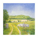 Wessex Sheep Giclee Print by  Ditz