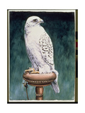 Gyr Falcon, 1986 Giclee Print by Sandra Lawrence