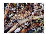 Kenyan Leopard, 1997 Giclee Print by Odile Kidd
