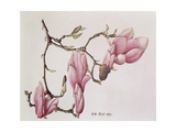Magnolia X Soulangiana, 1992 Giclee Print by Ruth Hall