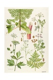 Garden Angelica and Other Plants Giclee Print by Elizabeth Rice