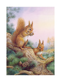 Pair of Red Squirrels on a Scottish Pine Giclee Print by Carl Donner