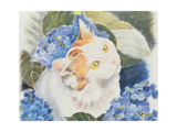 Turkish Van Giclee Print by Anne Robinson