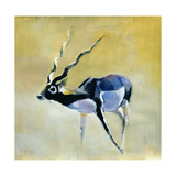 Black Buck, Velavadar, 1997 Giclee Print by Mark Adlington
