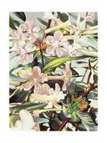 Humming Bird, 1989 Giclee Print by Sandra Lawrence