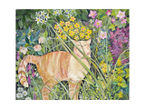 Cat and Long Grass, 1996 Giclee Print by Hilary Jones