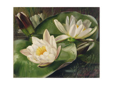Water Lilies Giclee Print by Albert Williams