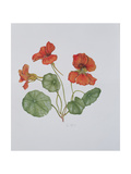 Nasturtium, 1999 Giclee Print by Ruth Hall