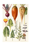 Beetroot and Other Vegetables Giclee Print by Elizabeth Rice