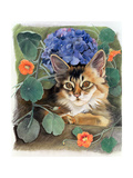 Sootsy with Hydrangea Giclee Print by Anne Robinson