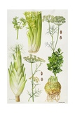 Celery, Fennel, Dill and Celeriac Giclee Print by Elizabeth Rice