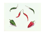 Chillies and Peppers, 2005 Giclee Print by Alison Cooper