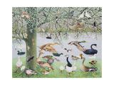 The Odd Duck Reproduction procédé giclée par Pat Scott