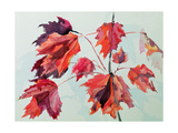 No.24 Autumn Maple Leaves Giclee Print by Izabella Godlewska de Aranda