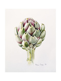 Artichoke Study, 1993 Giclee Print by Alison Cooper