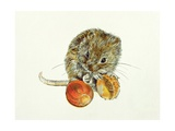 Vole with an Acorn Giclee Print by Diane Matthes