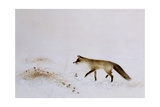 Fox in Snow Giclee Print by Jane Neville