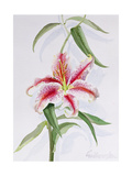 Lily, 1998 Giclee Print by Izabella Godlewska de Aranda