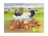 Hen in a Box of Apples, 1990 Giclee Print by E.B. Watts