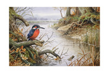 Kingfisher Giclee Print by Carl Donner