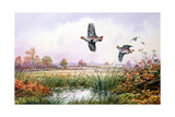 Partridge in Flight Giclee Print by Carl Donner