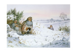 Grey Partridge Giclee Print by Carl Donner