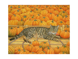 The Pumpkin-Cat, 1995 Giclee Print by  Ditz