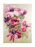 Anemones Giclee Print by Joan Thewsey